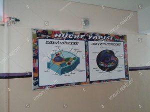 hucre-yapisi-tabela